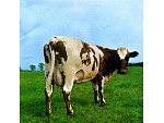 "Os 45 Anos de ""Atom Heart Mother"""